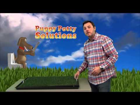 puppypottysolutions.com