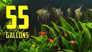The BEST Ideas for Your 55 Gallon Aquarium by Aquarium Co-Op