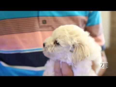 Rossi, o cãozinho agredido em Porto Alegre passa bem! TV Animal