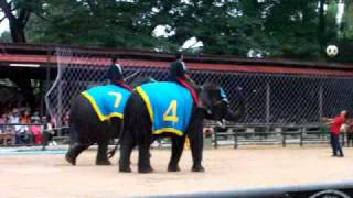 Greg's Video  Elephant Show Pattaya Thailand- My Own Documentary Video