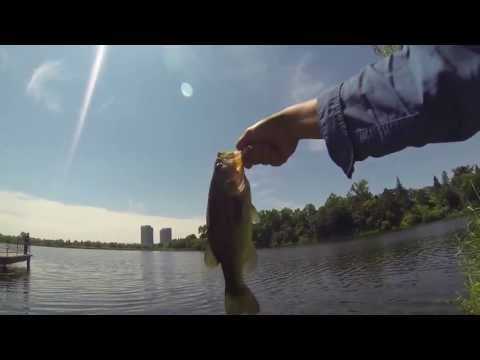 WTF? Grenadier Pond, High Park – Bass Fishing Part 1 – July 20th