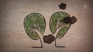 WWF-Brasil &#8211; Programa Madeira é Legal<br/>Dá pra construir grandes obras com madeira?