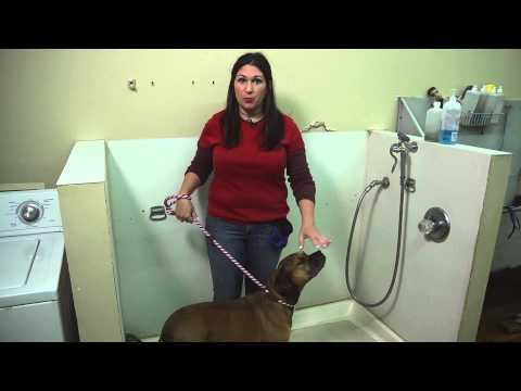 How to Bathe a Large Dog Who Is Resistant During Bath Time? : Dog Training Tips