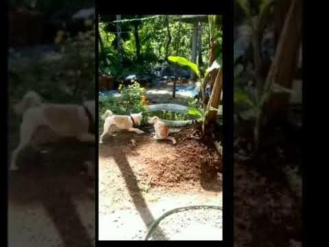 大白狗VS小花猫见过什么叫神龙摆尾吗!进来见识一下