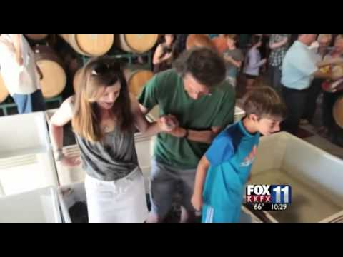 KKFX Coverage of Anacapa School's Grape Stomp 2014 at Fess Parker Winery