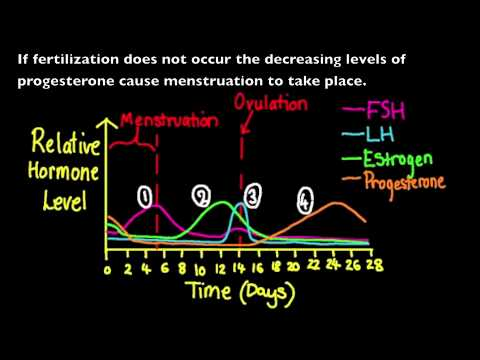 lutenizing hormone - 6.6.3 Annotate a graph showing hormone levels in the menstrual cycle, illustrating the relationship between changes in hormone levels and ovulation, menstrua...