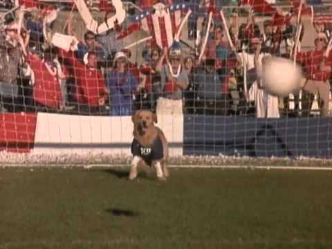 Air Bud - futispennut