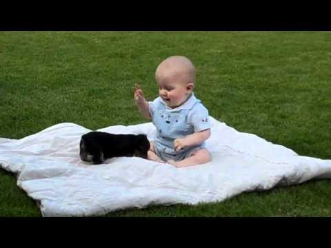UFC 2012 Cachorro VS bebe