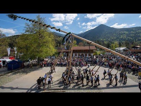 München: Mehr als 10.000 Besucher bei der Maibaum-Tradi ...