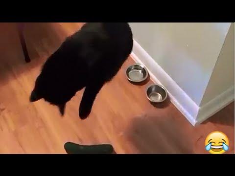 la reazione incredibile che hanno i gatti vedendo una zucchina