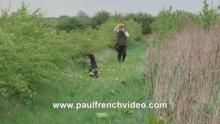 HPR Free Gundog Tips  - Memory Retrieves using a track with Rory Major