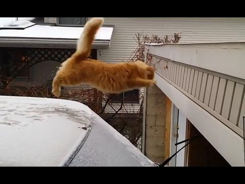 Adorable Compilation of Miscalculating Kitties