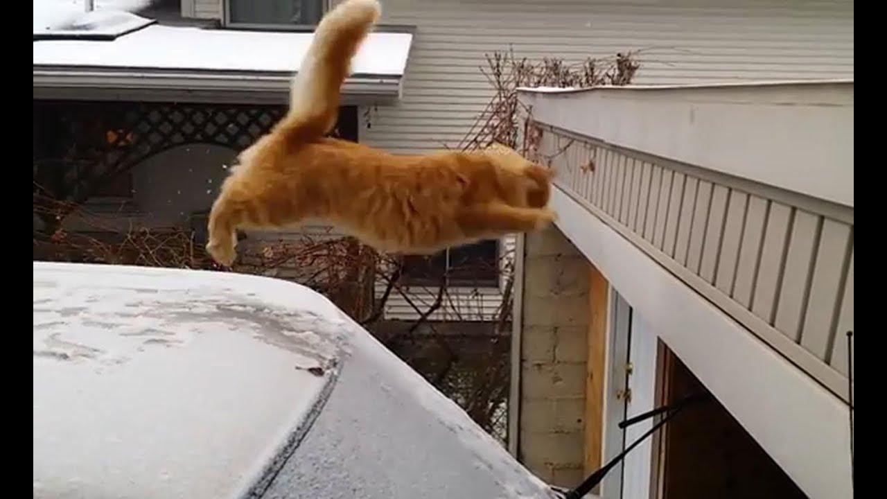 Funny Cat Jump Fail 2015