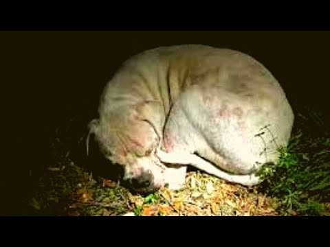 Officers Found This Dog Cowering Alone In The Everglades. When The Flashlight Lit His Face? Shockin