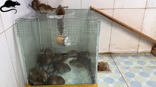 Video Mouse trap with water cans and wire mesh / best way to make homemade mousetrap MP3, 3GP, MP4, WEBM, AVI, FLV Agustus 2019