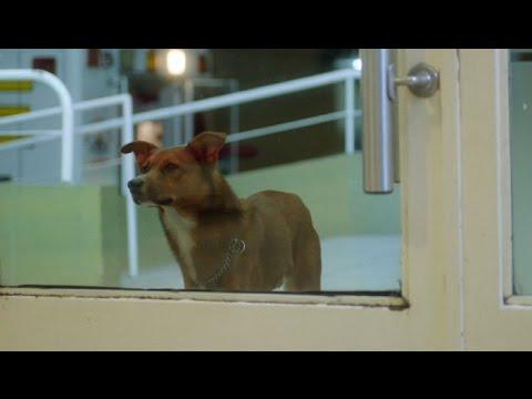 un uomo va in ospedale ma il suo cane decide di non abbandonarlo!
