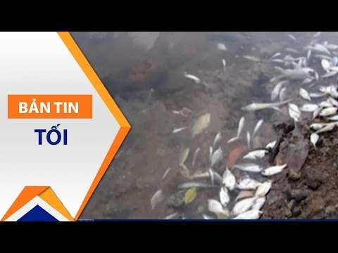 Huế: Cá chết quanh vùng nước màu vàng trên biển | VTC - Thời lượng: 51 giây.