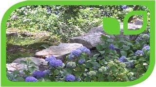 #1256 Schweizer Hortensiengarten im Misox (Schweiz) - eine aussergewöhnliche Geschichte