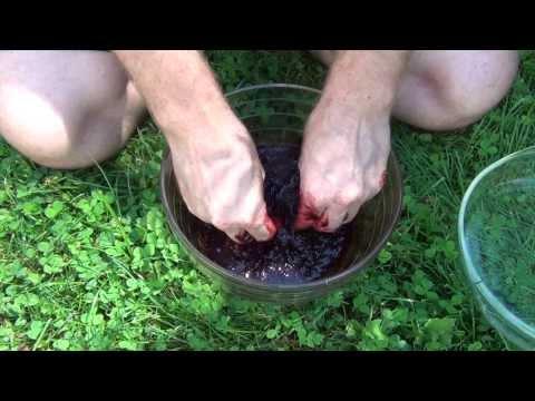 Blackberry Fruit Leather