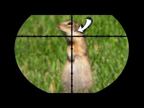 pest control - This video describes why I avoid using pesticides whenever possible. By using a rifle or shotgun to remove pests, you prevent collateral damage (killing non-...