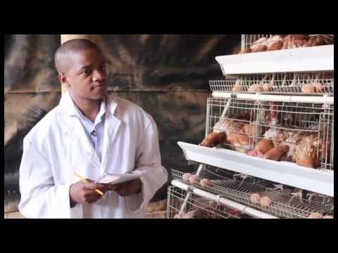 BREEDING CASH WITH RENRAY POULTRY SOLUTIONS