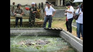 Abah Nasrudin Lele Sangkuriang Gadog Jawa Barat