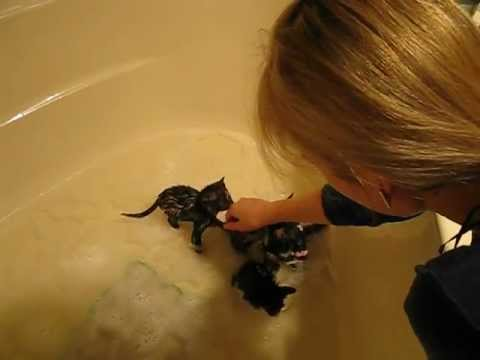 A bunch of kittens getting a bath.