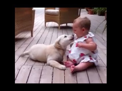 Puppy meets Baby – See what happens