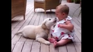 Squeaky Baby Getting More From The Golden Retriever Puppy Than She Asked For