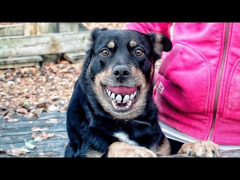 Doggy Dog Workout - Funny Animals