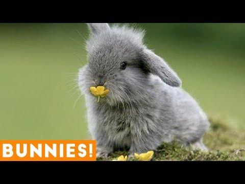 Estes adoráveis coelhinhos irão alegrar seu dia!