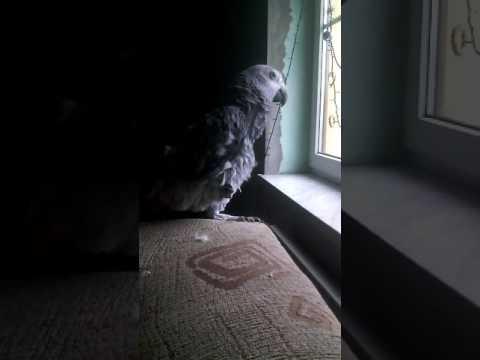 Gadająca papuga Lusia