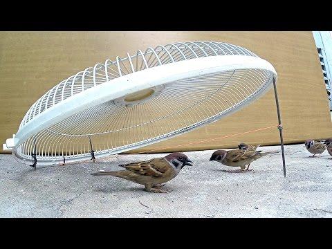 Electric fan guard bird trap - Thời lượng: 6 phút, 57 giây.