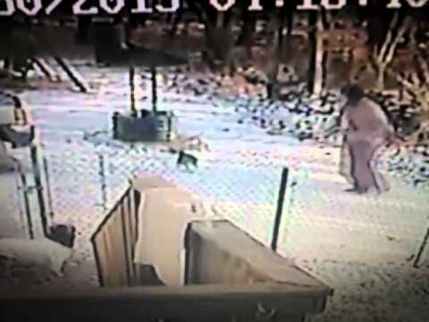 Stray cat attacks woman in the snow