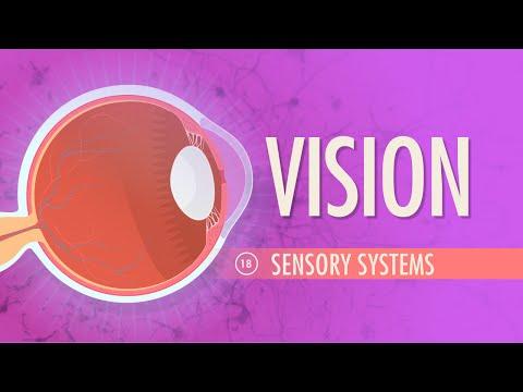 Vision: Crash Course A&P #18