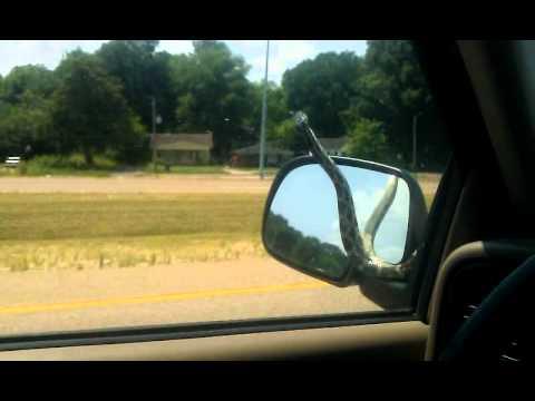 SNAKE ON A CAR