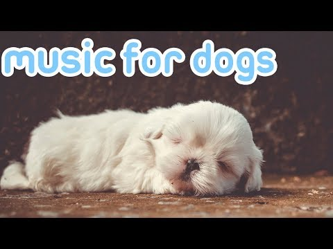 15 HOURS Of Deep Sleep Relaxing Dog Music! NEW Helped 10 Million Dogs!