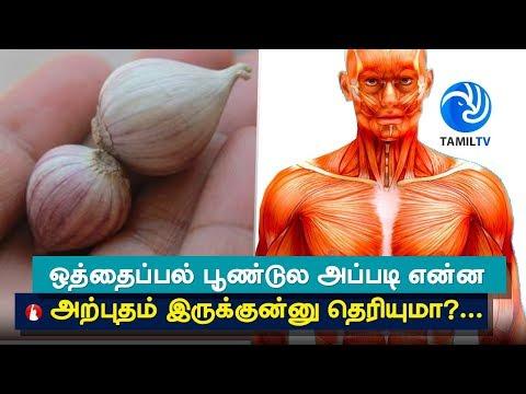Video Top 5 Health Benefits of Himalayan Single Clove Garlic - Tamil TV download in MP3, 3GP, MP4, WEBM, AVI, FLV January 2017