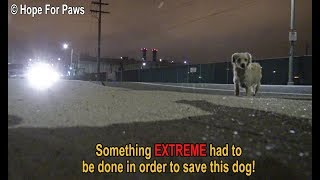 Download Youtube: Something EXTREME had to be done in order to save this homeless dog.  DON'T BLINK or you'll miss it!