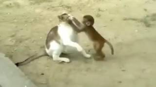 Monkey & Cats @ Masti Time