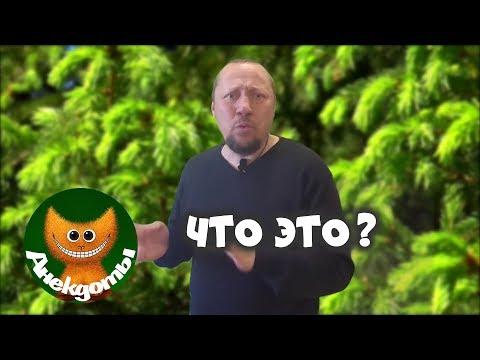 Про Фублю. Анекдоты - DomaVideo.Ru