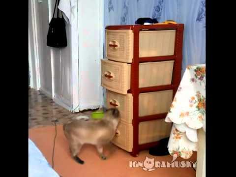 un gatto rovista in un cassetto, ma guardate cosa succede...