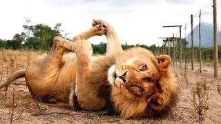 Video hewan lucu - lucu video binatang. Kompilasi MP3, 3GP, MP4, WEBM, AVI, FLV Juni 2017