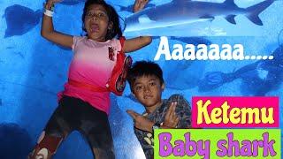 Video Ada BABY SHARK beneraannn..!!! MP3, 3GP, MP4, WEBM, AVI, FLV Desember 2018