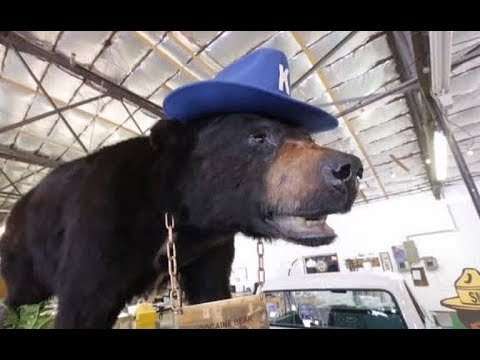 The story of the Cocaine Bear who was found dead in the woods after eating 76 pounds ($15 million worth) of cocaine.