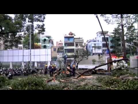 TP HCM: Hàng loạt cây xanh bị ngã đổ sau cơn mưa