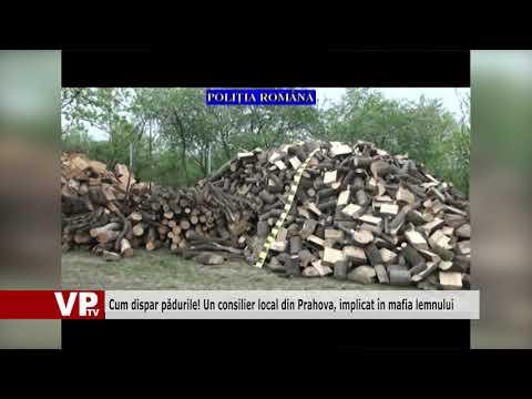 Cum dispar pădurile! Un consilier local din Prahova, implicat în mafia lemnului