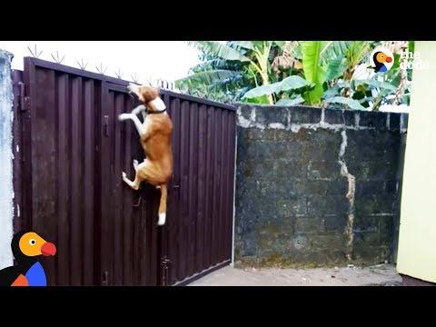 cani-artisti-della-fuga