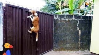 Dog Escape Artists Compilation | The Dodo by The Dodo