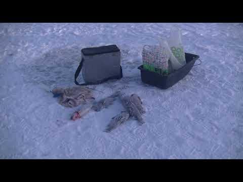 Видео отчет о рыбалке за 1 декабря 2018